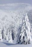 Alberi di pino innevati in montagne Immagine Stock