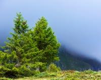 Alberi di pino in montagne Fotografie Stock