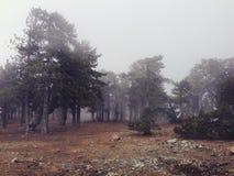 Alberi di pino montano nebbiosi nel Cipro immagine stock