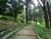 Alberi di pino nella foresta Immagini Stock Libere da Diritti