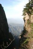 Alberi di pino sul fianco di una montagna Immagine Stock