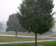Alberi di pioggia Immagini Stock Libere da Diritti