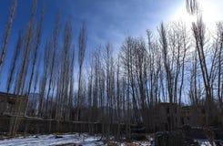 Alberi di pioppo nel villaggio di Leh durante l'inverno immagine stock libera da diritti