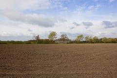 Alberi di primavera e campo coltivato Immagini Stock