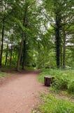 Alberi di primavera nella campagna britannica Fotografia Stock
