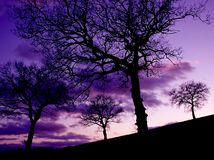Alberi di quercia al tramonto Fotografia Stock