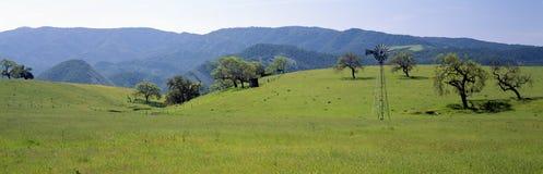 Alberi di quercia e del mulino a vento in primavera immagini stock libere da diritti