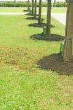 Alberi di recente piantati Fotografie Stock Libere da Diritti