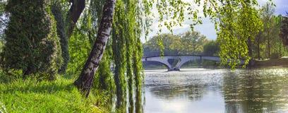 Alberi di salice e della betulla che pendono sopra il lago e poco ponte b fotografia stock