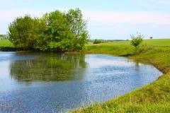 Alberi di salice nel lago Fotografia Stock