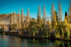 Alberi di salice sulla banca di un fiume in autunno immagine stock