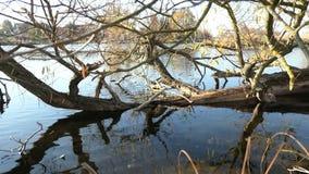 Alberi di salice sulla riva del fiume di Havel Paesaggio di regione di Havelland germany archivi video