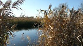 Alberi di salice sulla riva del fiume di Havel Paesaggio di regione di Havelland germany stock footage