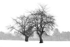 Alberi di Snowy Fotografie Stock