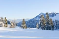Alberi di Snowy IV Fotografie Stock