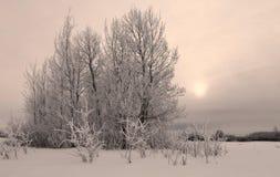 Alberi di Snowy nei campi al crepuscolo di inverno Fotografia Stock Libera da Diritti