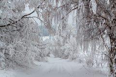 Alberi di Snowy in paesaggio di inverno e strada rurale fotografia stock