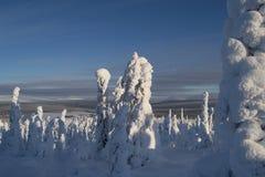 Alberi di Snowy sulla montagna Fotografia Stock Libera da Diritti