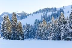 Alberi di Snowy V Fotografia Stock Libera da Diritti