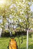 Alberi di spruzzatura La cura degli alberi Il concetto di giardinaggio e di agricoltura Fotografie Stock