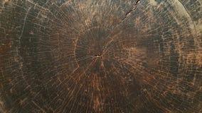 Alberi di superficie del centro Fotografia Stock Libera da Diritti