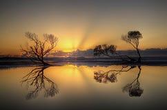 Alberi di tramonto Immagine Stock Libera da Diritti