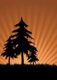 Alberi di tramonto Fotografie Stock Libere da Diritti