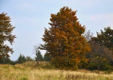 Alberi di un autunno e un prato nelle montagne del minerale metallifero Immagini Stock