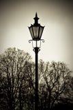 alberi di vecchio stile della lanterna della priorità bassa Fotografie Stock Libere da Diritti