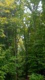 Alberi di verde di foresta della natura Immagini Stock Libere da Diritti