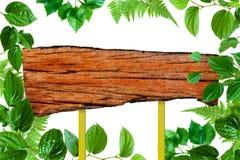Alberi di verde di struttura ed isolato di legno della pianta della foglia Immagine Stock