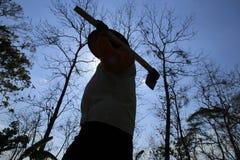 Alberi di Wither Fotografia Stock Libera da Diritti