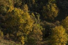 Alberi differenti nella foresta Fotografie Stock