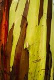 Alberi dipinti dei sogni fotografia stock