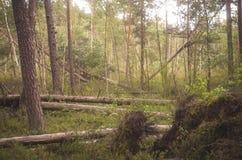 Alberi dopo la tempesta Fotografia Stock Libera da Diritti
