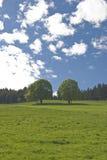 alberi due fotografia stock libera da diritti