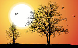 alberi due Immagini Stock Libere da Diritti