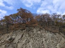 Alberi durante l'autunno immagini stock