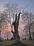 Alberi durante l'inverno nel Kashmir fotografia stock