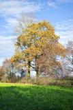 Alberi e campi in autunno Fotografia Stock
