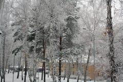 Alberi e case nella neve Immagini Stock Libere da Diritti