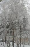 Alberi e case nella neve Fotografie Stock Libere da Diritti