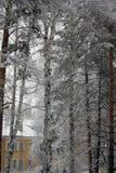 Alberi e case nella neve Fotografia Stock Libera da Diritti