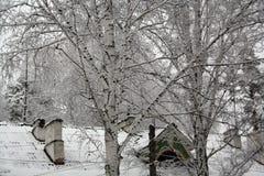 Alberi e case nella neve Fotografia Stock