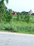 Alberi e case verdi Immagine Stock