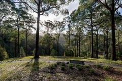 Alberi e cespugli australiani ai giardini botanici alti del supporto Immagini Stock Libere da Diritti
