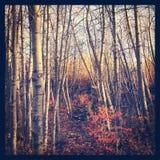 Alberi e cespugli di autunno con le foglie rosse fotografia stock libera da diritti