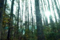 Alberi e cespugli nello scuro della foresta con il sole immagine stock libera da diritti