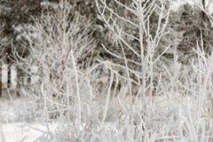 Alberi e cespuglio coperti di neve di brina Immagini Stock