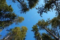 Alberi e cielo immagine stock